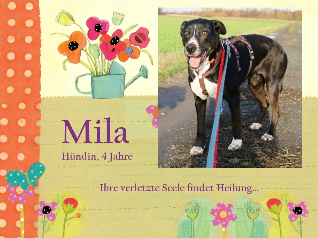 mila-collage