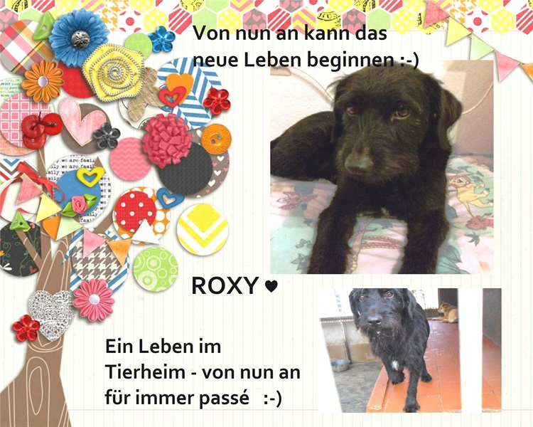 collage-roxy