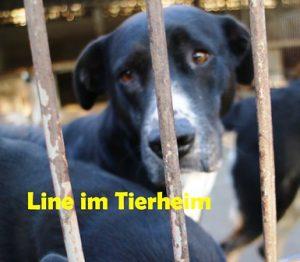line-mila-tierheim