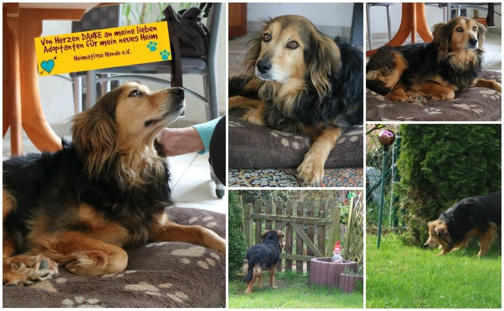 Chiko eine freundschaft fürs leben hunderasse